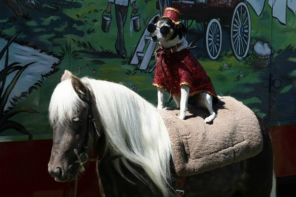 """""""Dog and Pony Show"""": Financial Expression of the Day 